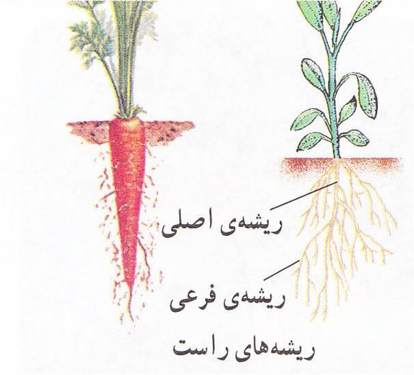 طرح جابر با موضوع انواع ریشه ها و کاربرد آن ها